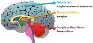 Cérebro Trino